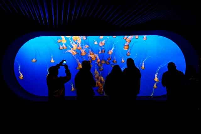 Monterey Bay Aquarium famous virtual tours online you can take on your couch vdiscovery arvinovoyage
