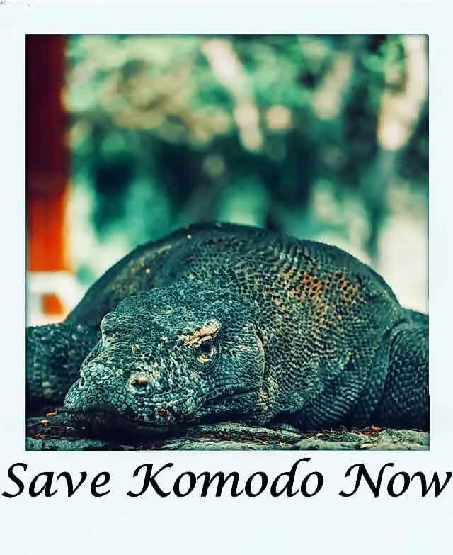 Save Komodo Now jurassic park project komodo island indonesia what you need to know vdiscovery arvinovoyage
