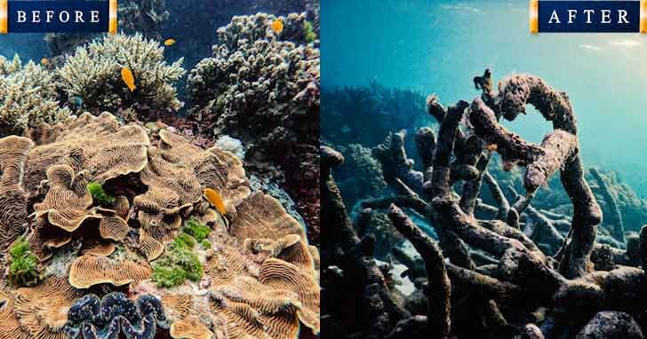 Great Barrier Reef 20 popular tourist locations under threat that are dying vdiscovery arvinovoyage